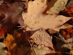 autumn-leaves-ducasse-580
